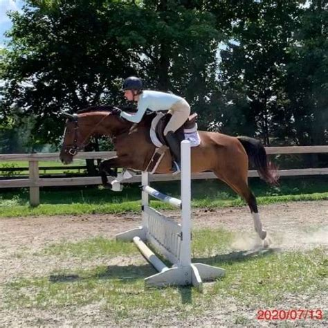 Fancy Mare With Lovely Movement and Great Potential