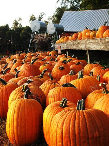 Don't Miss These 19 Great Pumpkin Patches In Nebraska This