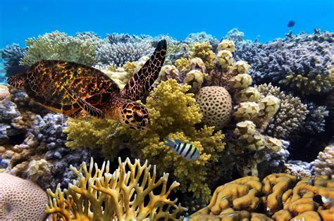 Global Hunger for Coal Endangers the Great Barrier Reef